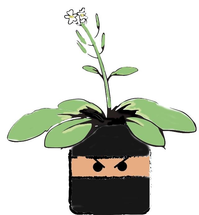 cropped-arabidopsis-ninja.png